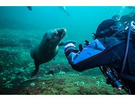 Tauchen mit Seehunden in Rostock